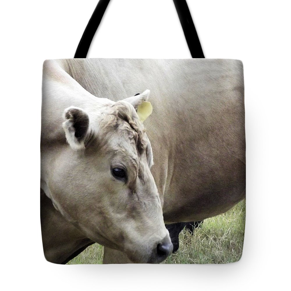 Cow Tote Bag featuring the photograph Catch My Good Side by Jennifer Stockman