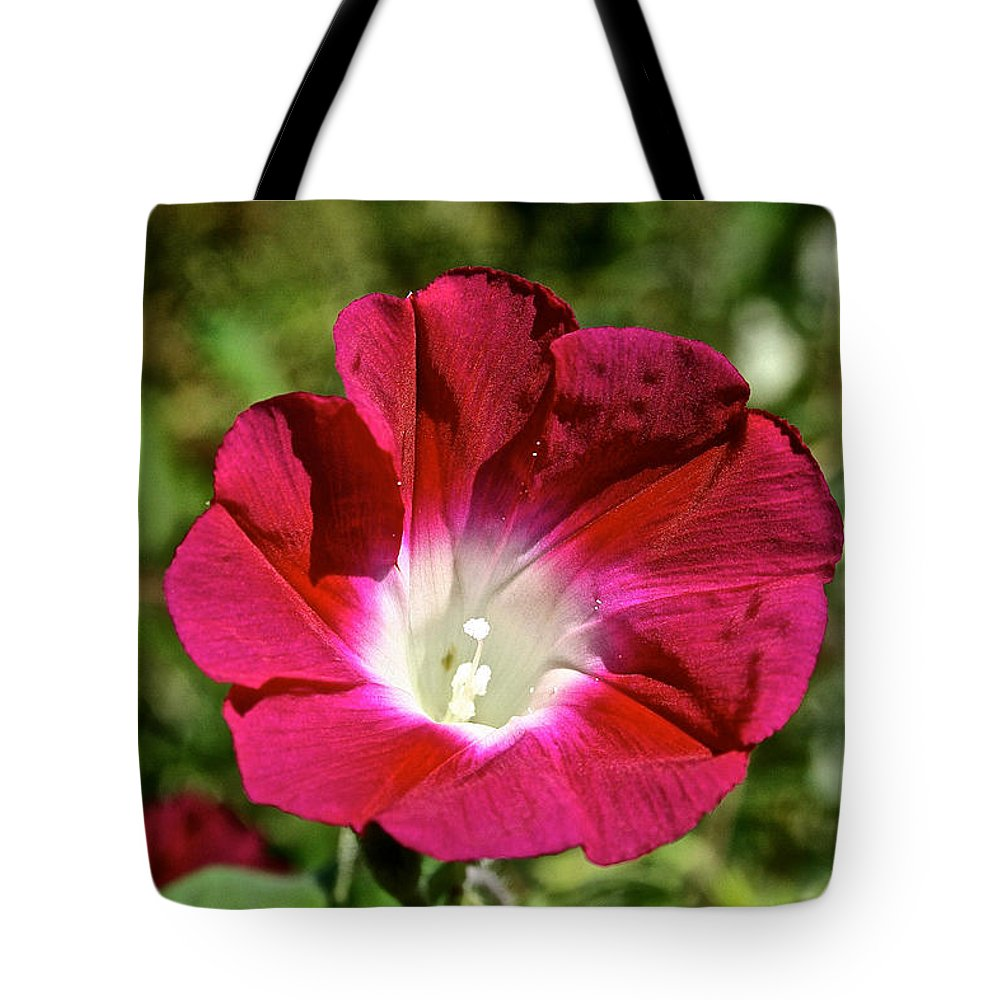 Flower Tote Bag featuring the photograph Celebrating A New Morning by Susan Herber