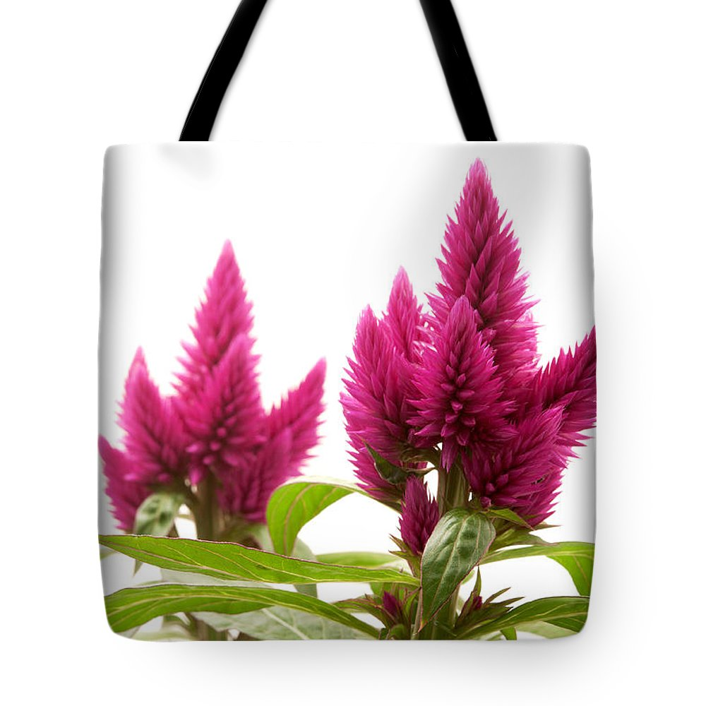 White Background Tote Bag featuring the photograph Celosia Argentea by Fabrizio Troiani