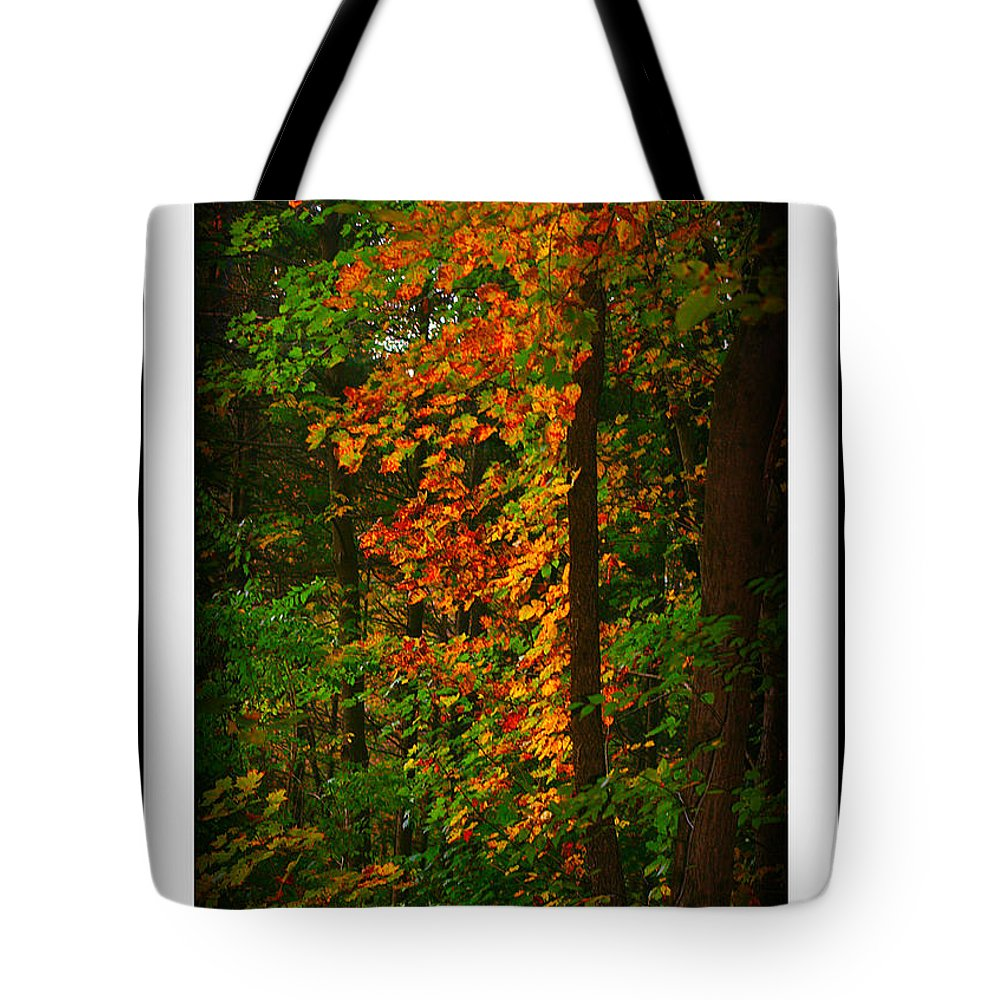 Changing Seasons Tote Bag featuring the photograph Changing Seasons by Barbara S Nickerson