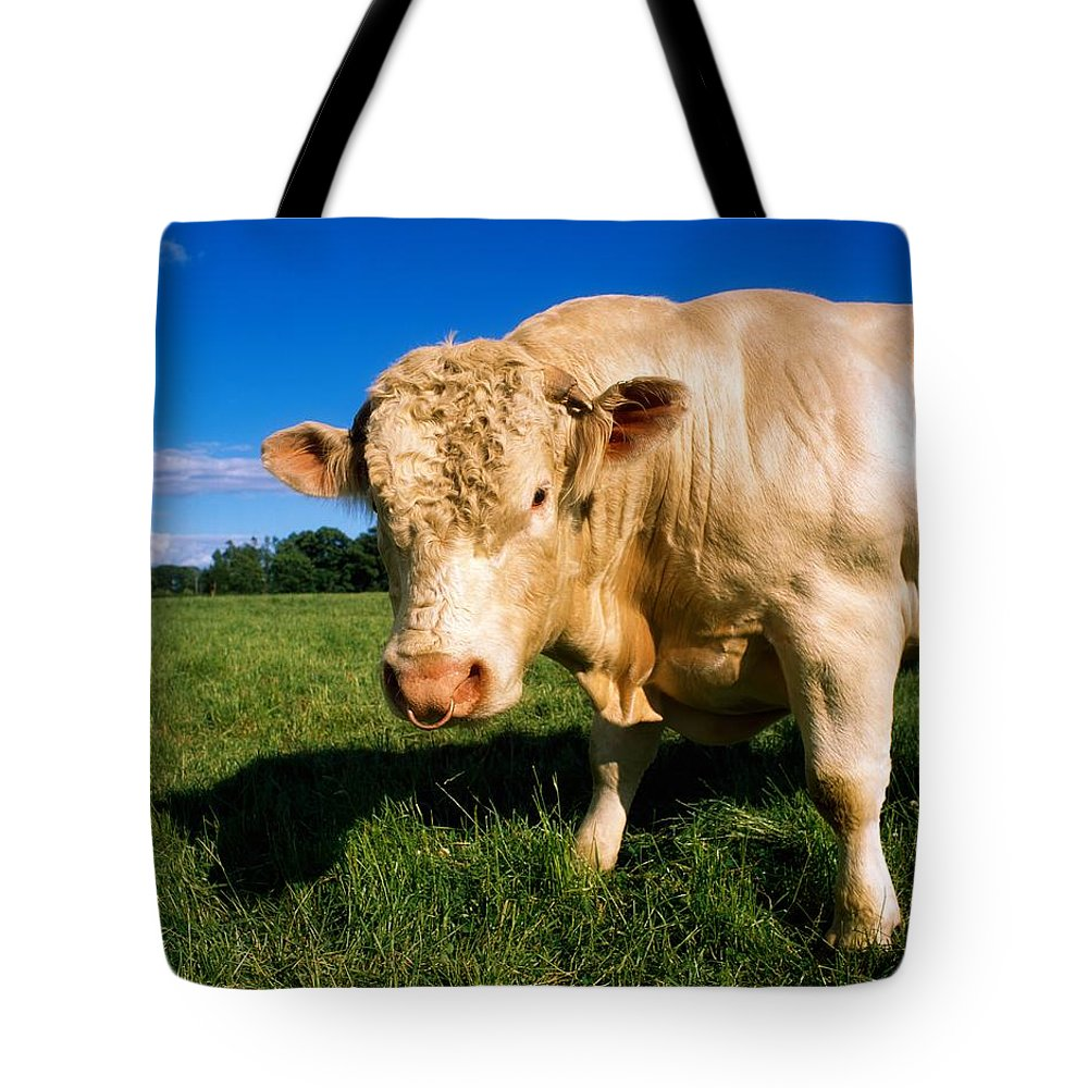 Bull Tote Bag featuring the photograph Charolais Bull, Ireland by The Irish Image Collection