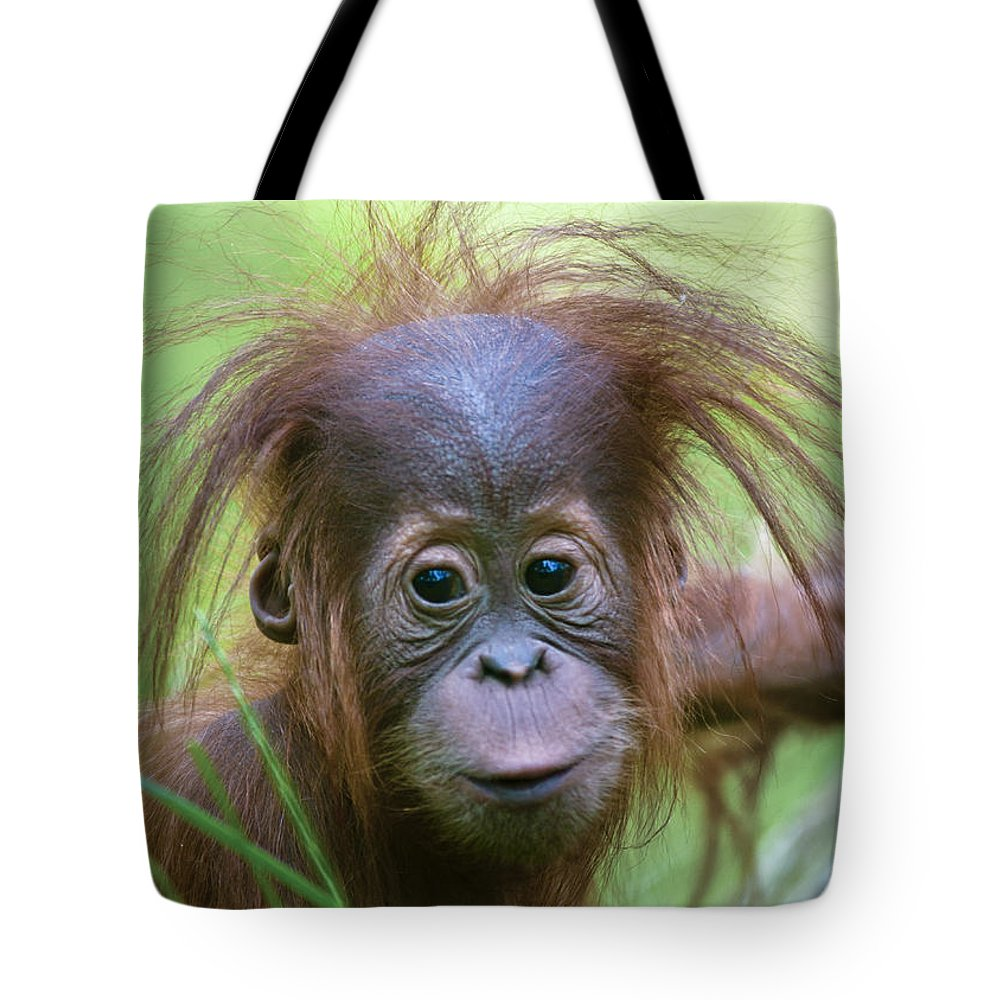 Asia Tote Bag featuring the photograph Cheeky Monkey by Andrew Michael