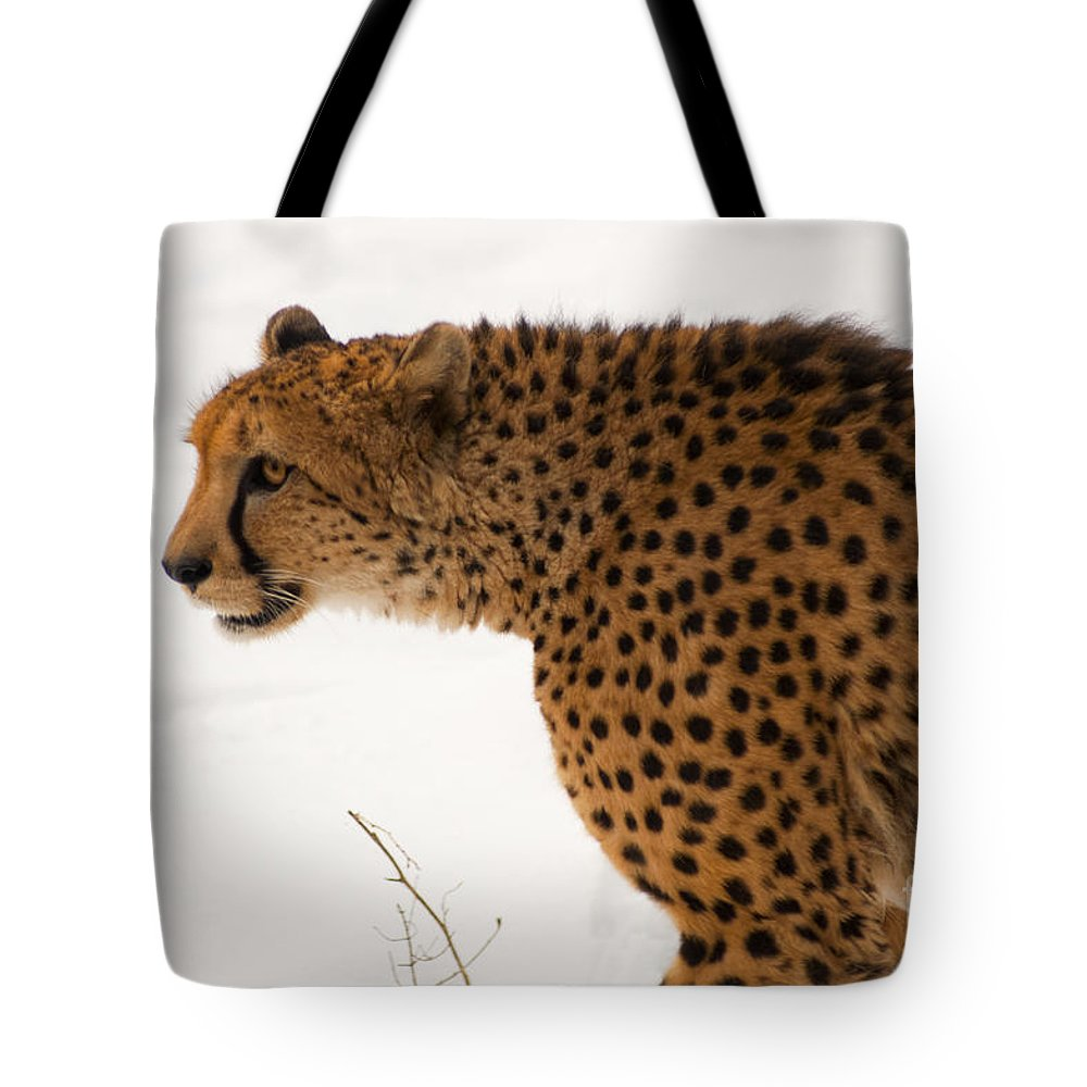 Acinonyx Tote Bag featuring the photograph Cheetah by Andrew Michael