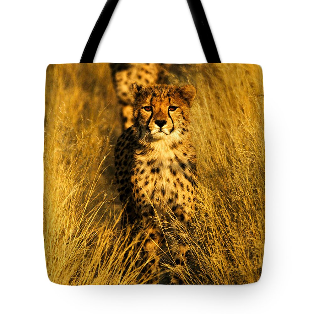 Tote Bag featuring the photograph Cheetah Cubs by Alistair Lyne