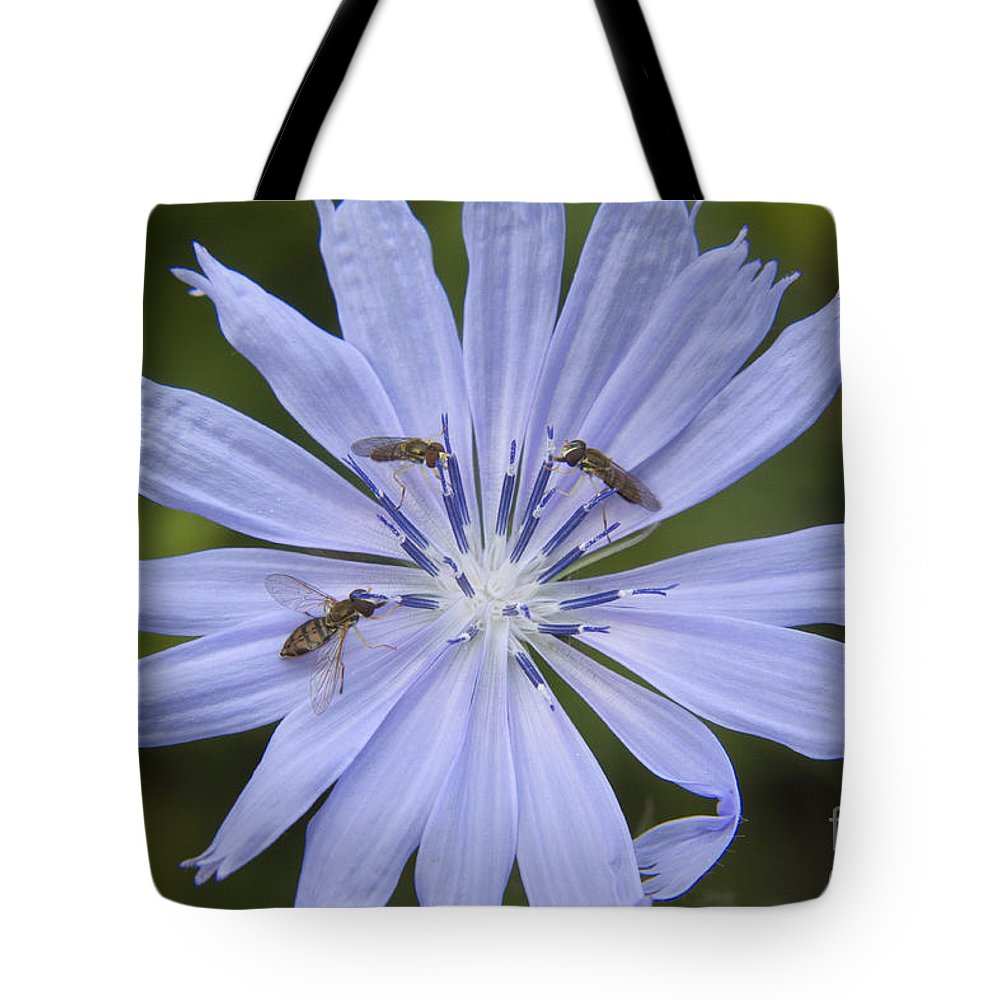 Chicory Tote Bag featuring the photograph Chicory For Three by Darleen Stry