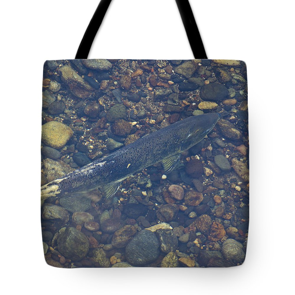 Salmon Tote Bag featuring the photograph Chinook Salmon by Jim And Emily Bush