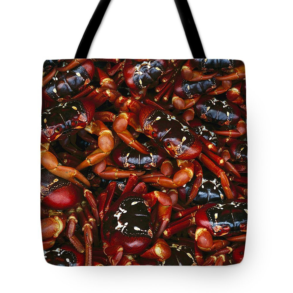 Ai Tote Bag featuring the photograph Christmas Island Red Crab Gecarcoidea by Jean-Paul Ferrero