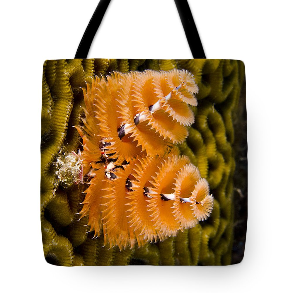 Mp Tote Bag featuring the photograph Christmas Tree Worm Spirobranchus by Pete Oxford