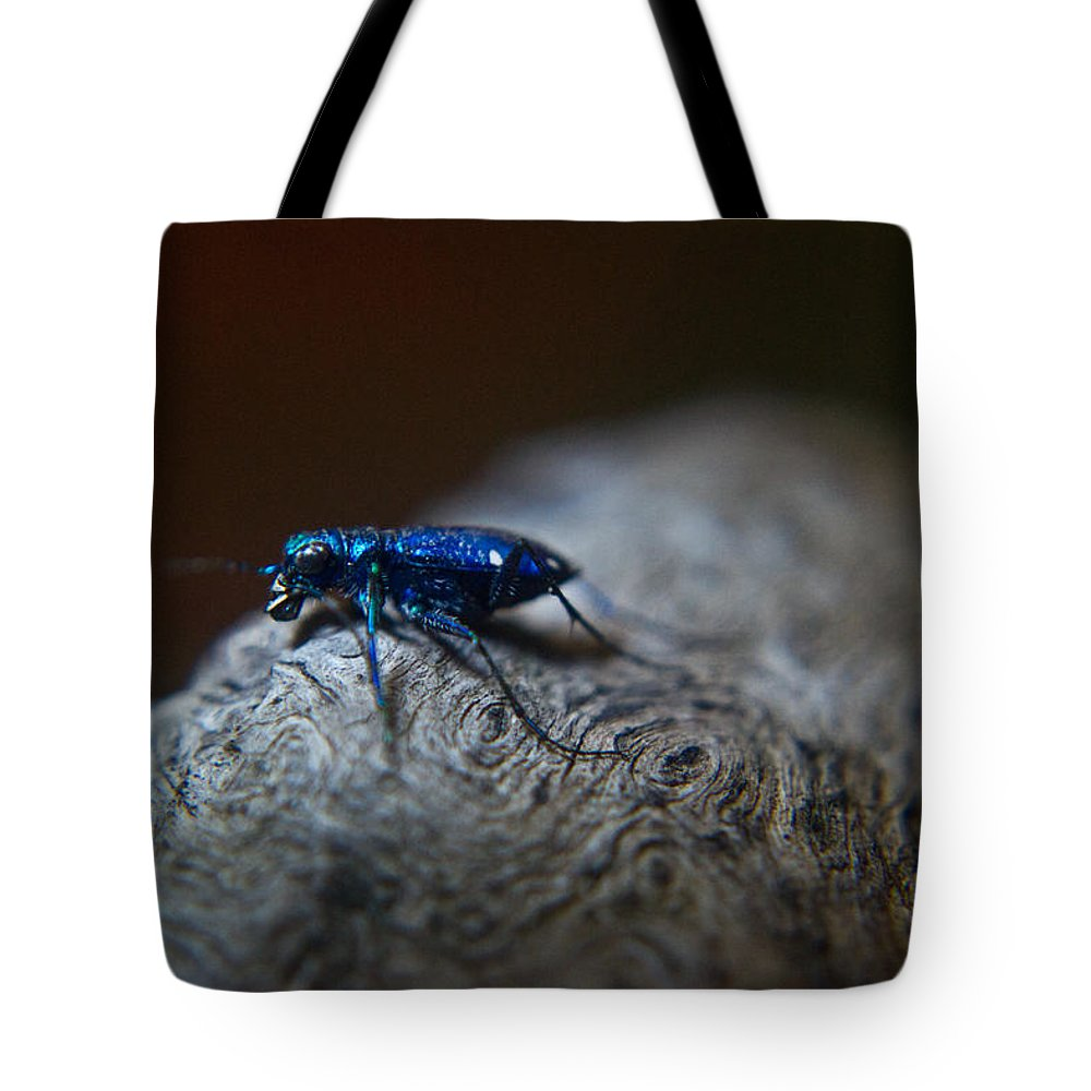 Insecta Tote Bag featuring the photograph Cicindellidae A Family Of Preditors by Douglas Barnett