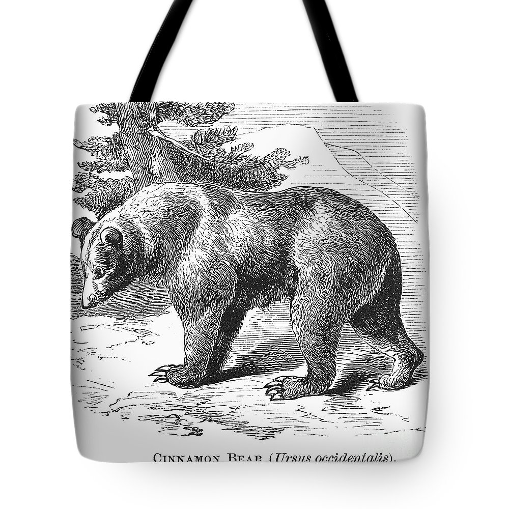 19th Century Tote Bag featuring the photograph Cinnamon Bear by Granger