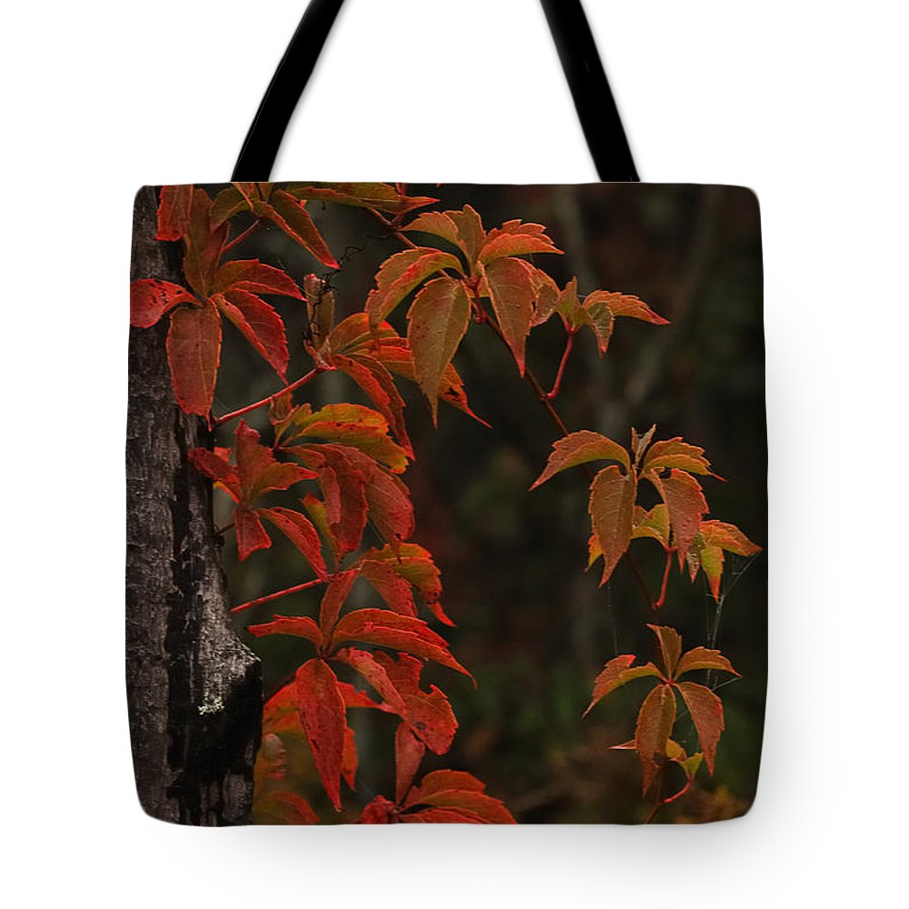 Nature Tote Bag featuring the photograph Circle Of Seasons by Susan Capuano