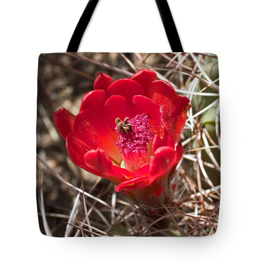 Nature Tote Bag featuring the photograph Claret Cup Cactus by David Salter