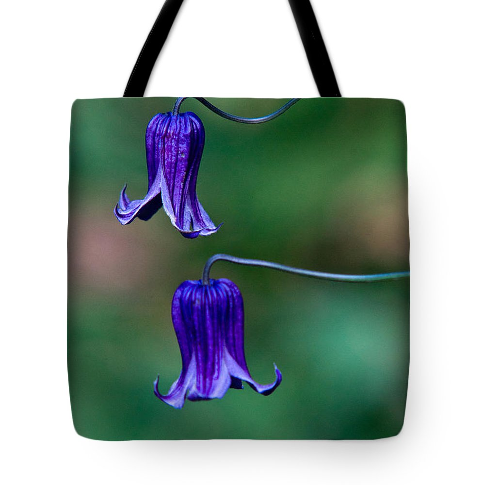 Clematis Tote Bag featuring the photograph Clematis Integrifolia Rooguchi 2 by Douglas Barnett