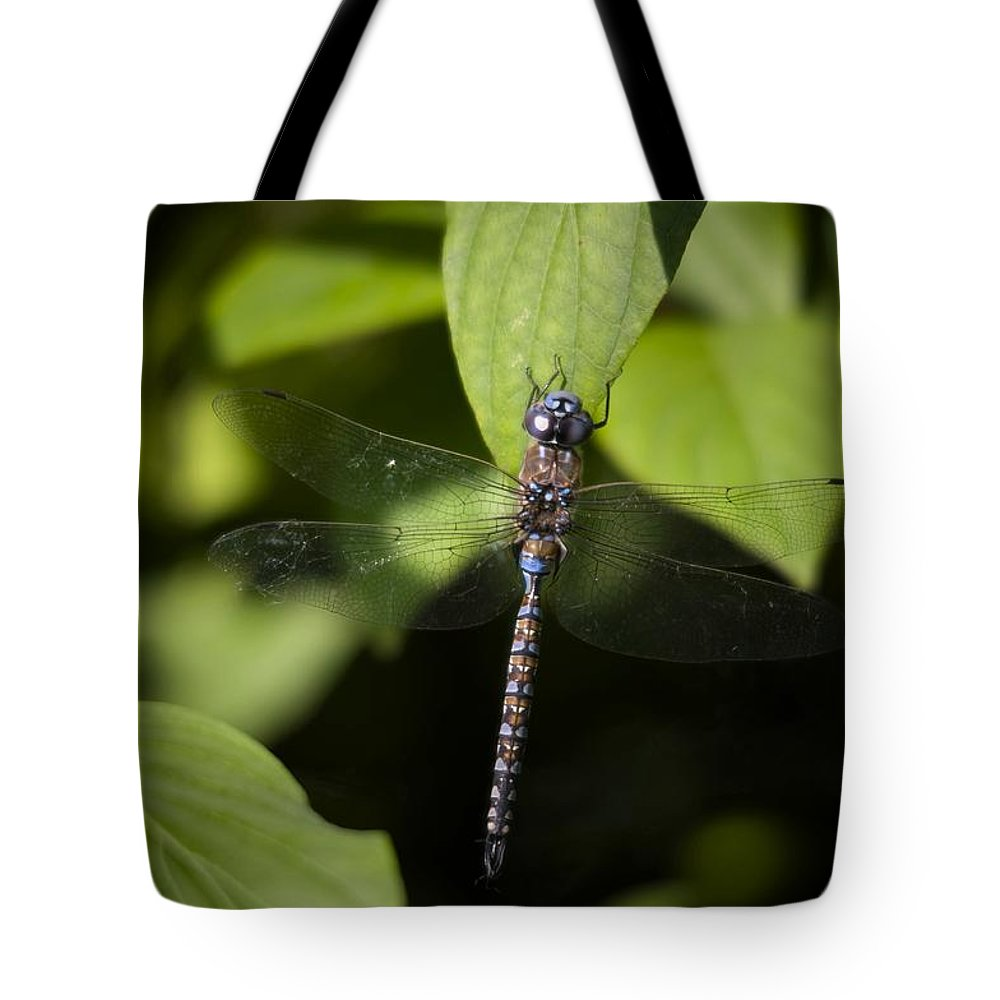 Dragonfly Tote Bag featuring the photograph Cling by Martin Cooper