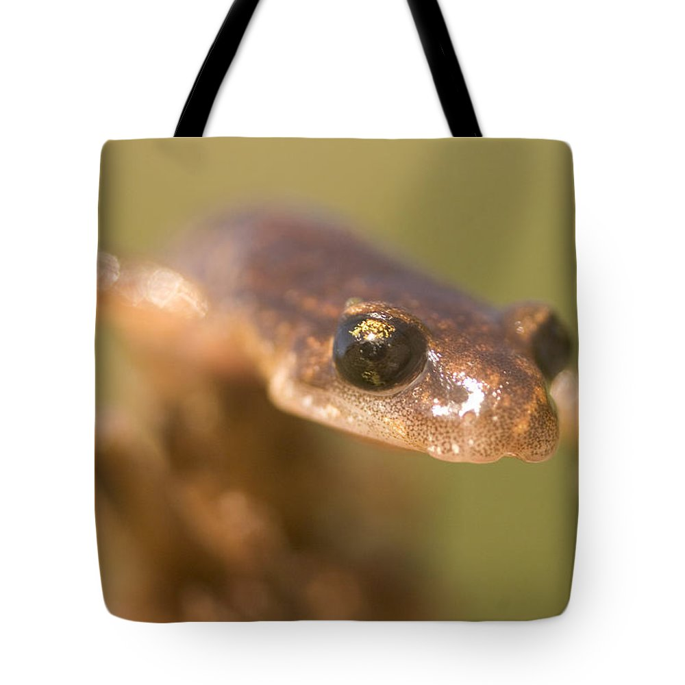 Photography Tote Bag featuring the photograph Close Up Of A California Newt Standing by Phil Schermeister