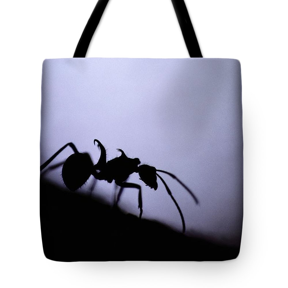 Borneo Island Tote Bag featuring the photograph Close-up Of A Silhouetted Ant by Mattias Klum