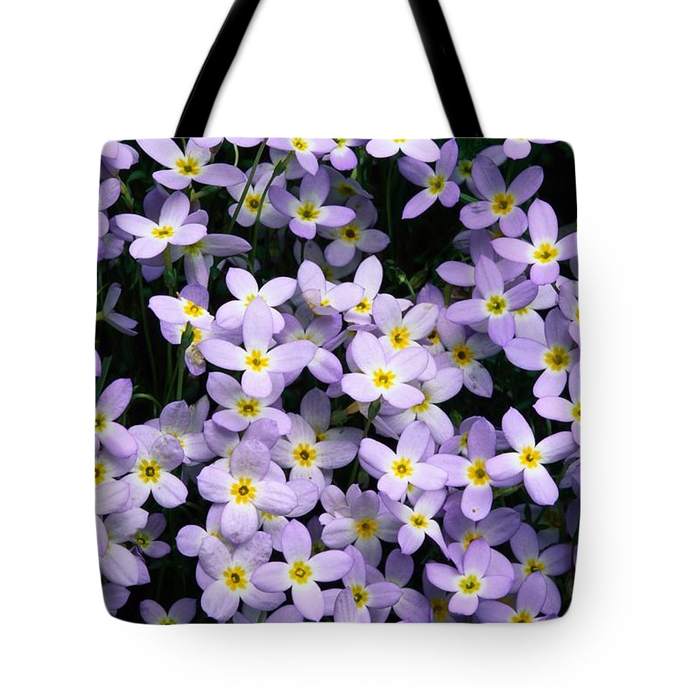 North America Tote Bag featuring the photograph Close-up Of Bluet Flowers Houstonia by Bates Littlehales