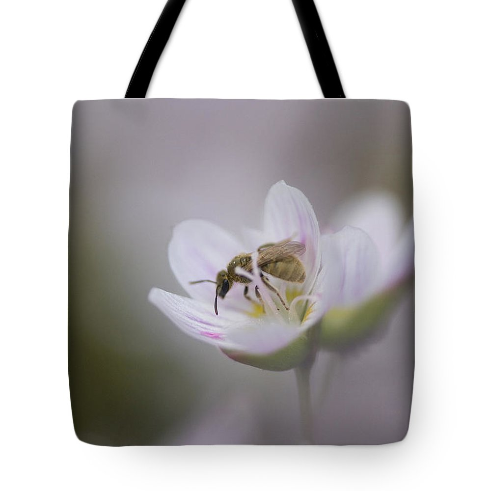 Close-up Tote Bag featuring the photograph Close-up Of Wasp Pollinating Eastern by Peter Van Rhijn