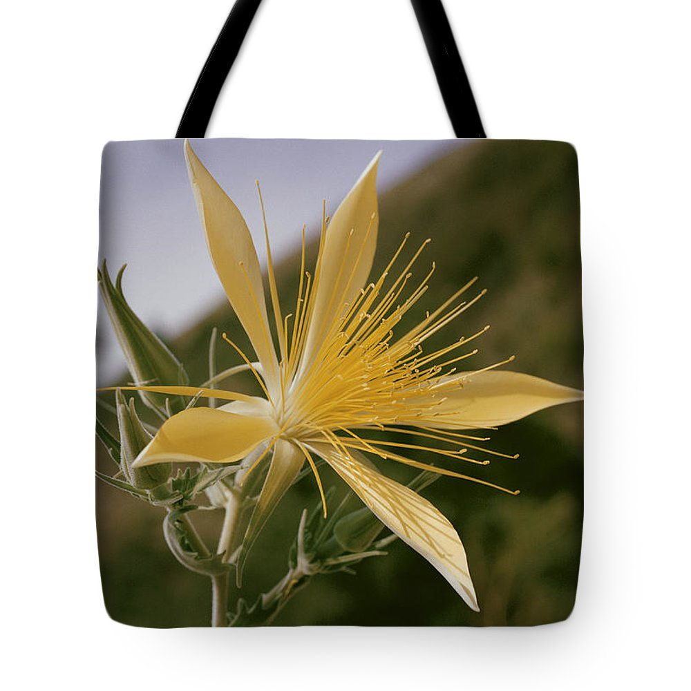 nez Perce National Forest Tote Bag featuring the photograph Close-up View Of A Blazing Star by B. Anthony Stewart