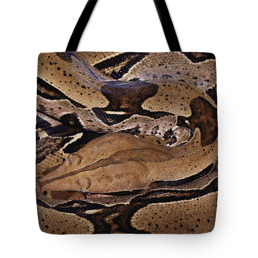 Patterns Tote Bag featuring the photograph Close View Of A Brightly Patterned Boa by Mattias Klum