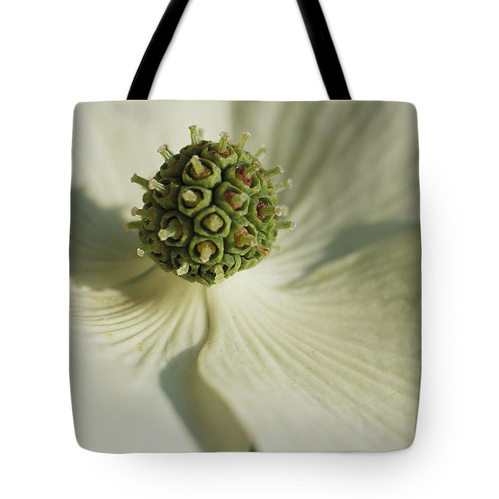 North America Tote Bag featuring the photograph Close View Of A Dogwood Blossom by Darlyne A. Murawski