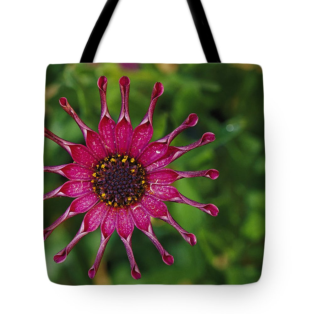 Patterns Tote Bag featuring the photograph Close View Of A South African Daisy by Jonathan Blair