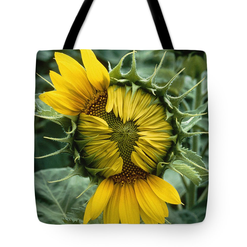 Plants Tote Bag featuring the photograph Close View Of A Sunflower Blossom by Darlyne A. Murawski