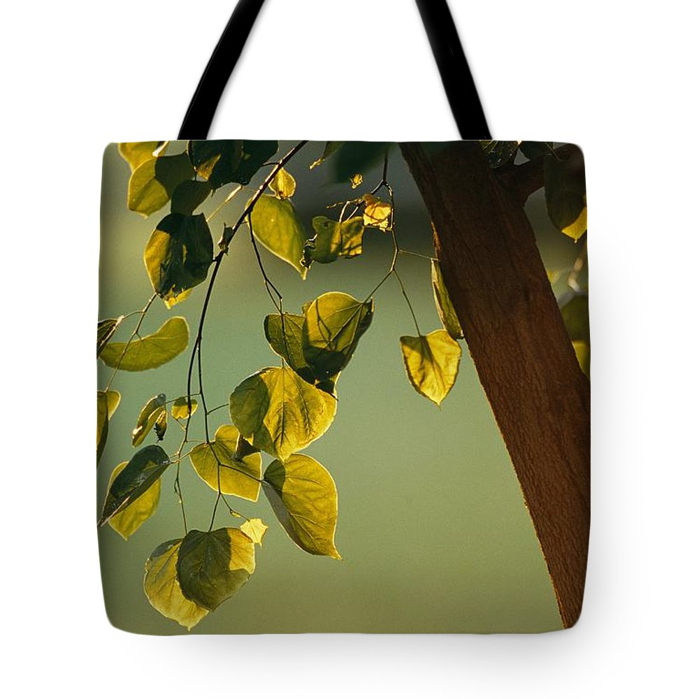 North America Tote Bag featuring the photograph Close View Of A Tree Branch And Leaves by Raymond Gehman
