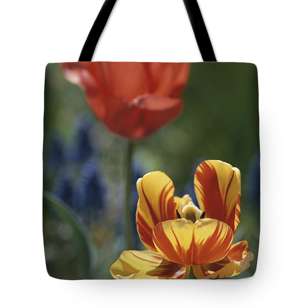 Plants Tote Bag featuring the photograph Close View Of Blossoming Tulips by Darlyne A. Murawski