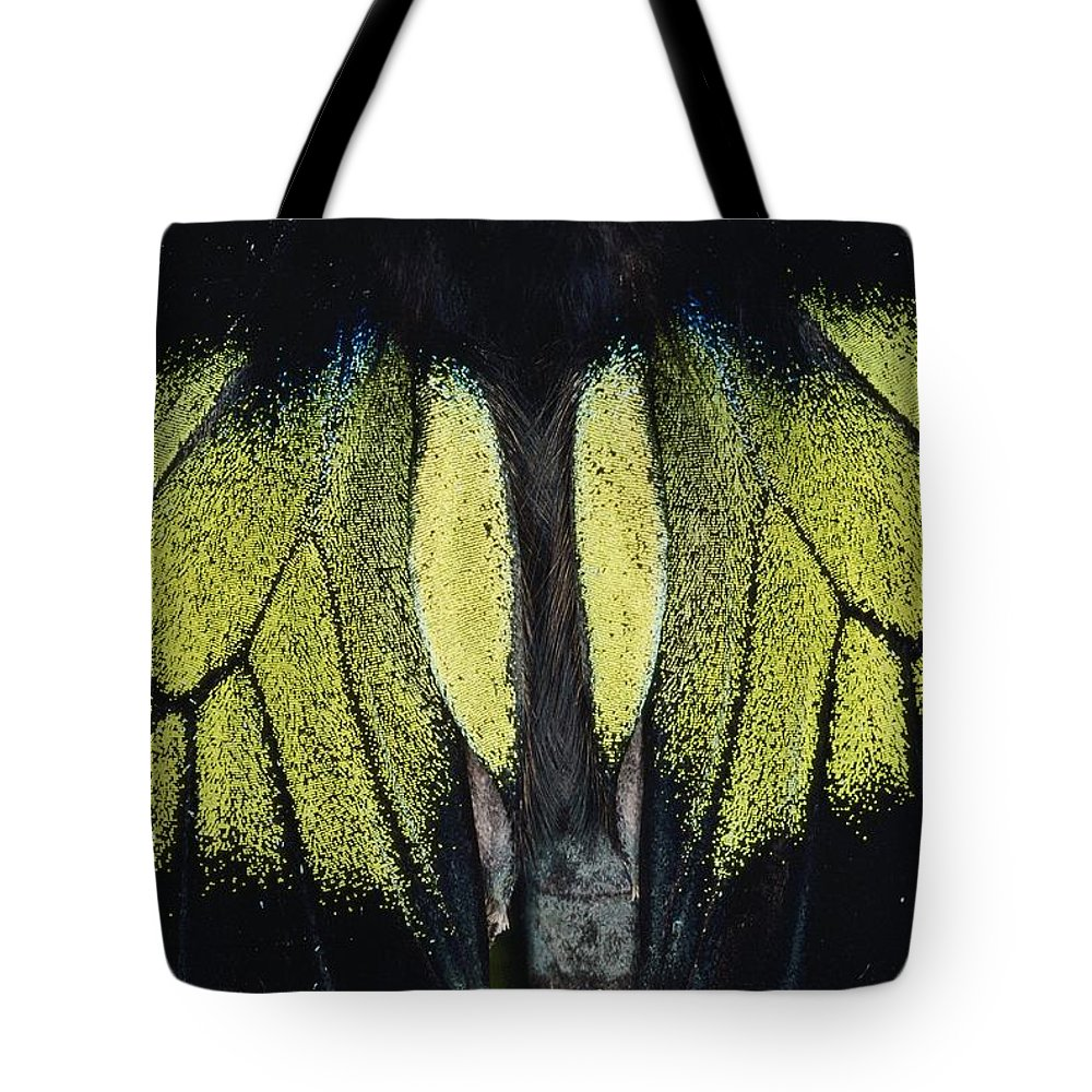 Danum Valley Conservation Area Tote Bag featuring the photograph Close View Of Iridescent Moth Wings by Mattias Klum