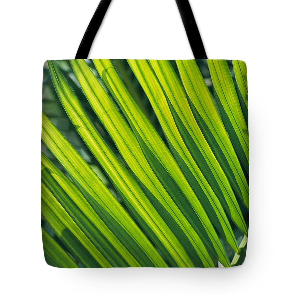 vietnam Tote Bag featuring the photograph Close View Of Palm Fronds by Steve Raymer
