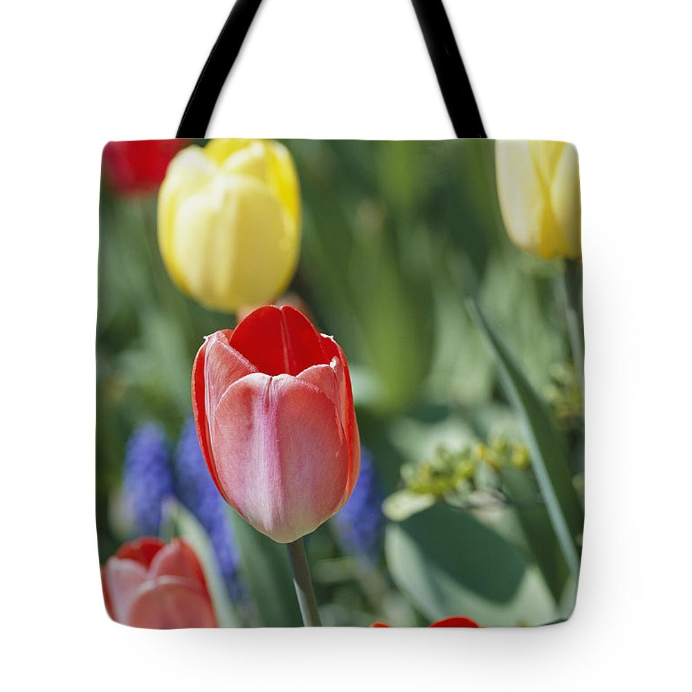 Plants Tote Bag featuring the photograph Close View Of Spring Tulips In Bloom by Darlyne A. Murawski