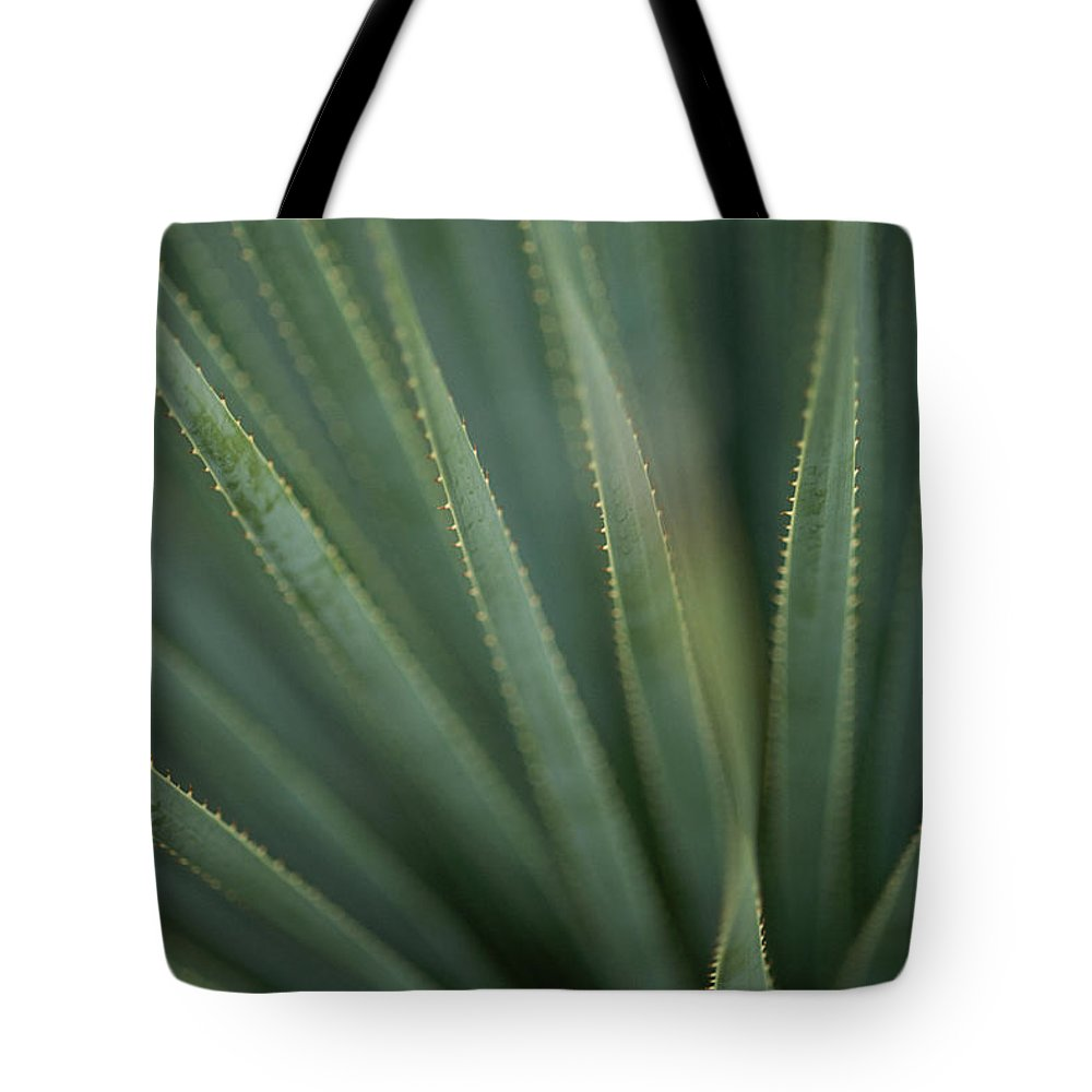 North America Tote Bag featuring the photograph Close View Of The Leaves Of A Sotol by Annie Griffiths