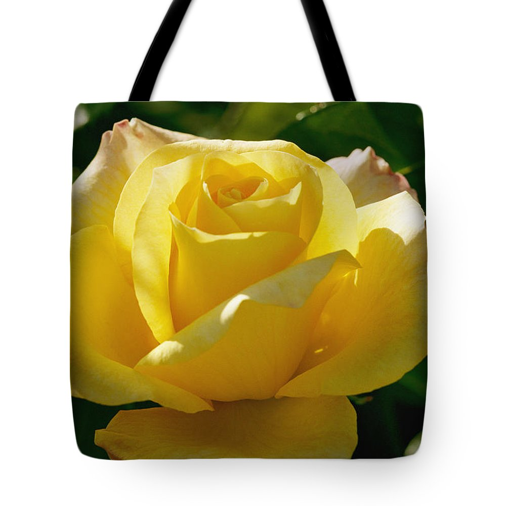 A.c. Postel Memorial Rose Garden Tote Bag featuring the photograph Close View Of The Rose Gold Medal by Marc Moritsch