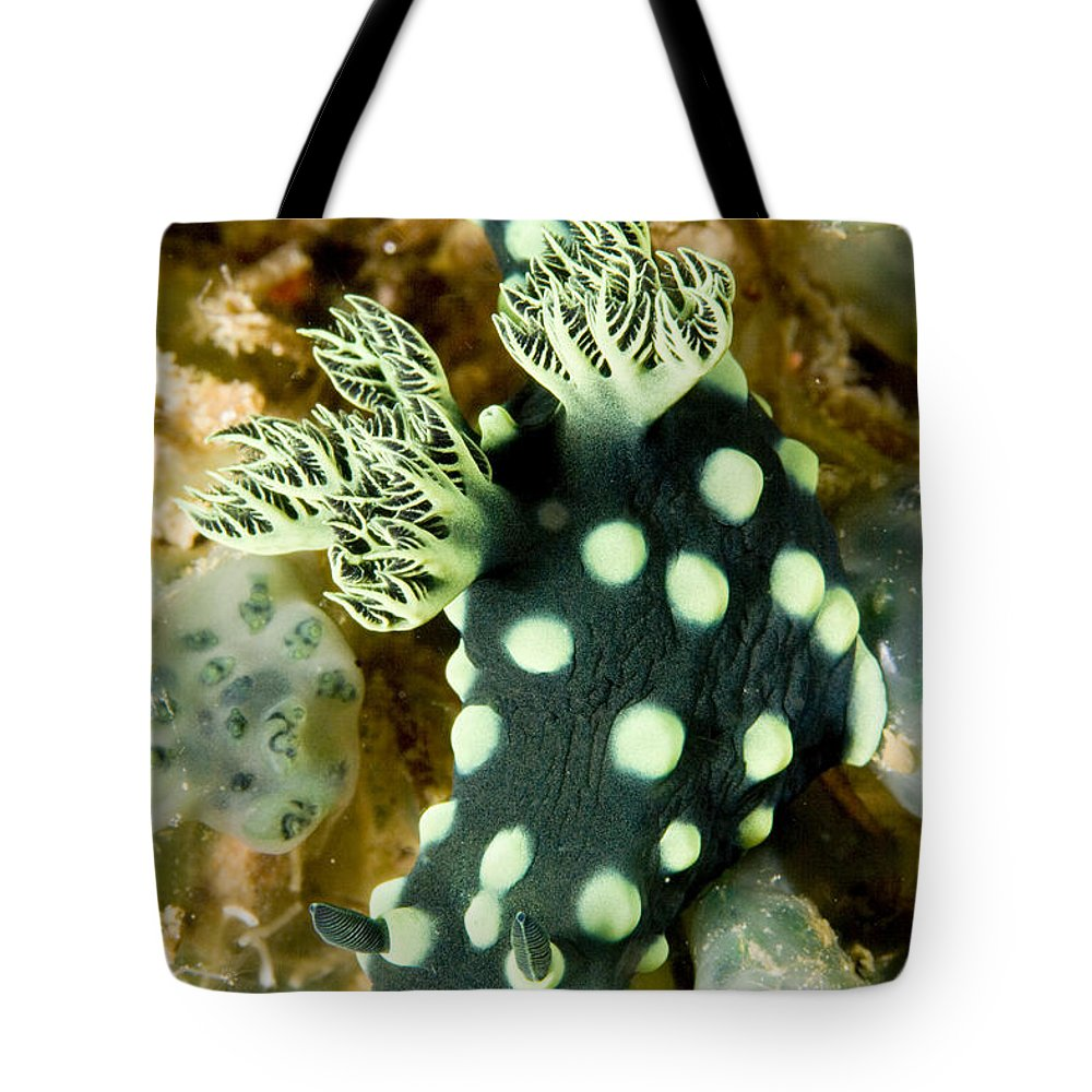 One Animal Tote Bag featuring the photograph Closeup Of Nudibranch Nembrotha by Tim Laman