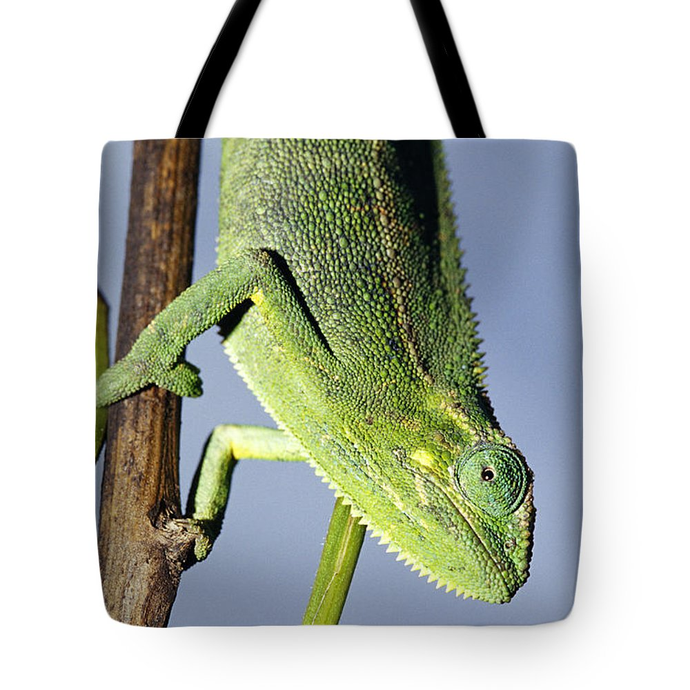Kisoro District Tote Bag featuring the photograph Closeup Of The Head Of A Montane by Jason Edwards