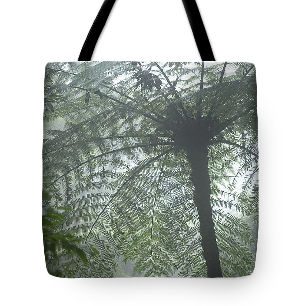 Attraction Tote Bag featuring the photograph Cloud Forest Ceiling, Costa Rica by Peter Van Rhijn