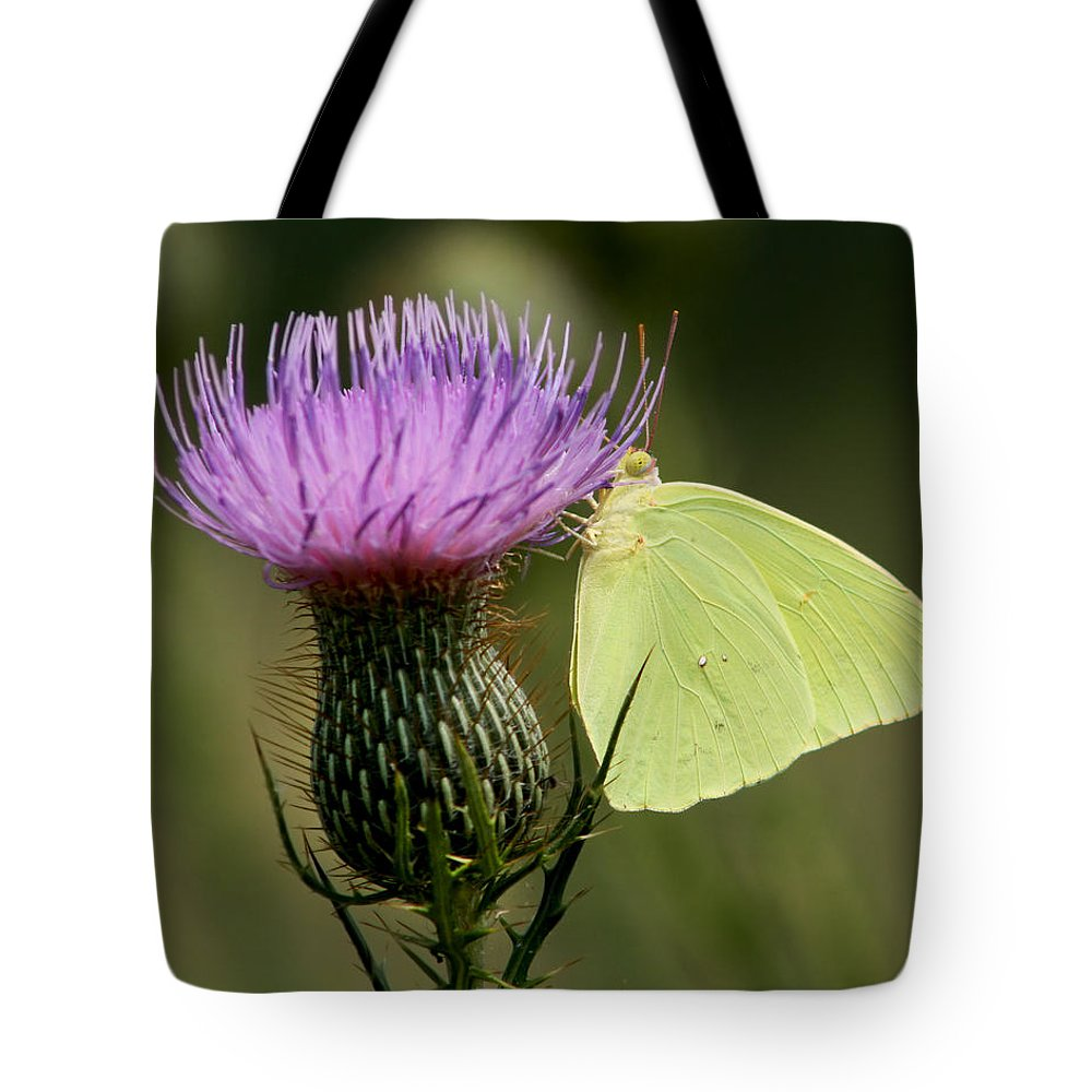 Phoebis Sennae Tote Bag featuring the photograph Cloudless Sulfur Butterfly On Bull Thistle Wildflower by Kathy Clark