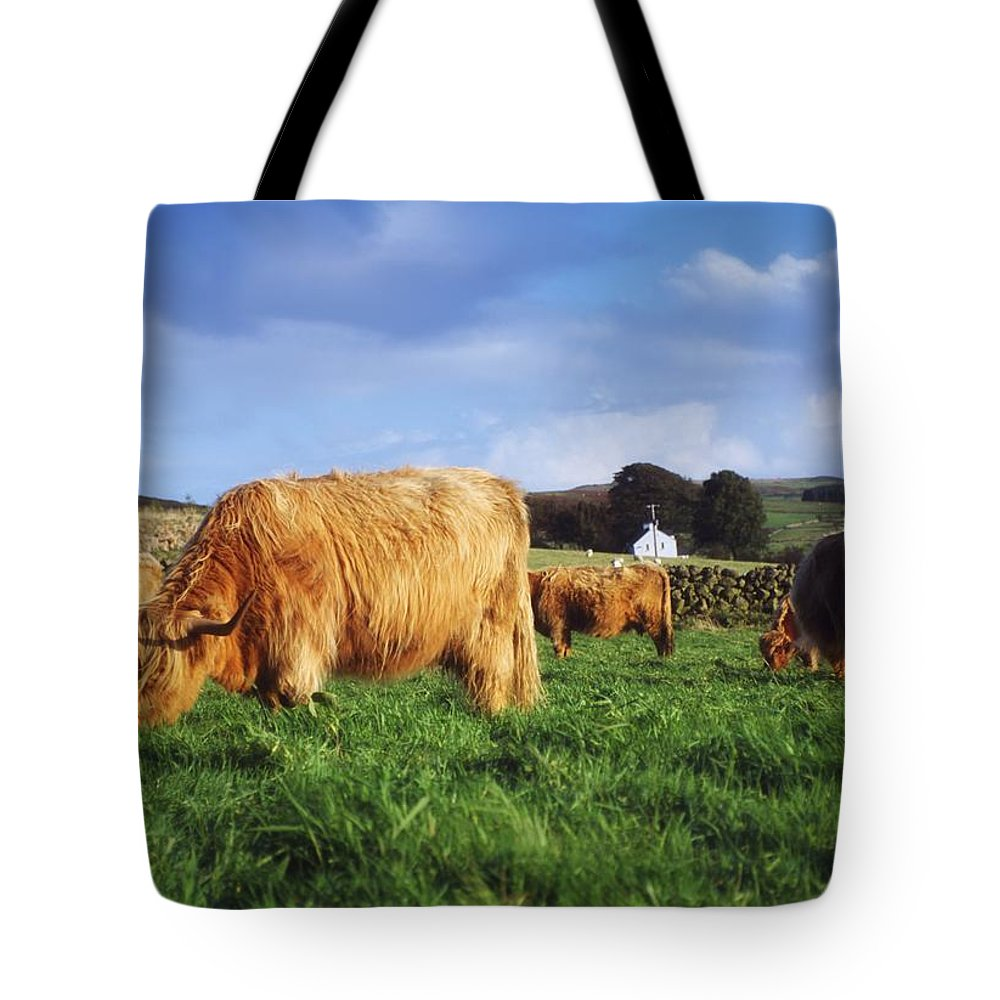 Animals Tote Bag featuring the photograph Co Antrim, Ireland Highland Cattle by The Irish Image Collection
