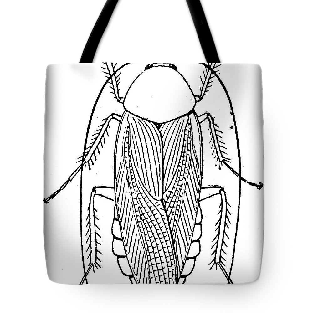 Animal Tote Bag featuring the photograph Cockroach by Granger