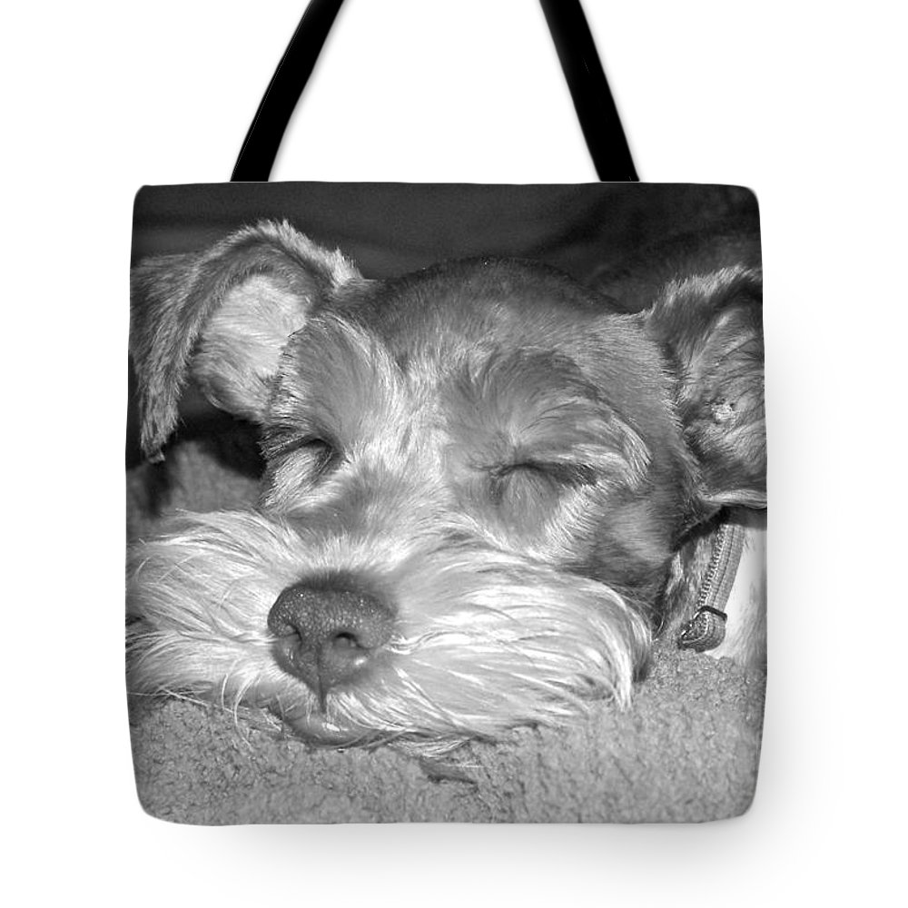 Dog Tote Bag featuring the photograph Coco Sleeping by Carol Bradley
