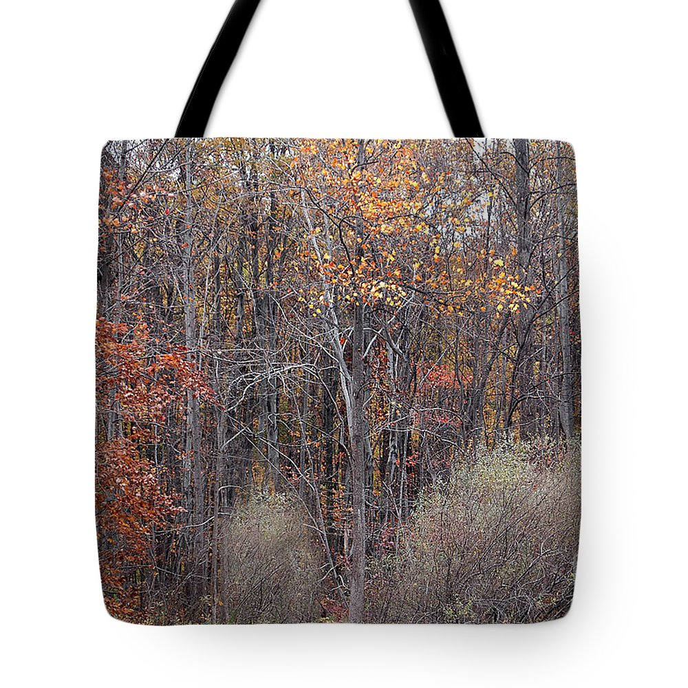 Fall Colors Similar Beautiful Matching Autumn Tote Bag featuring the photograph Colors Galore by Vilas Malankar