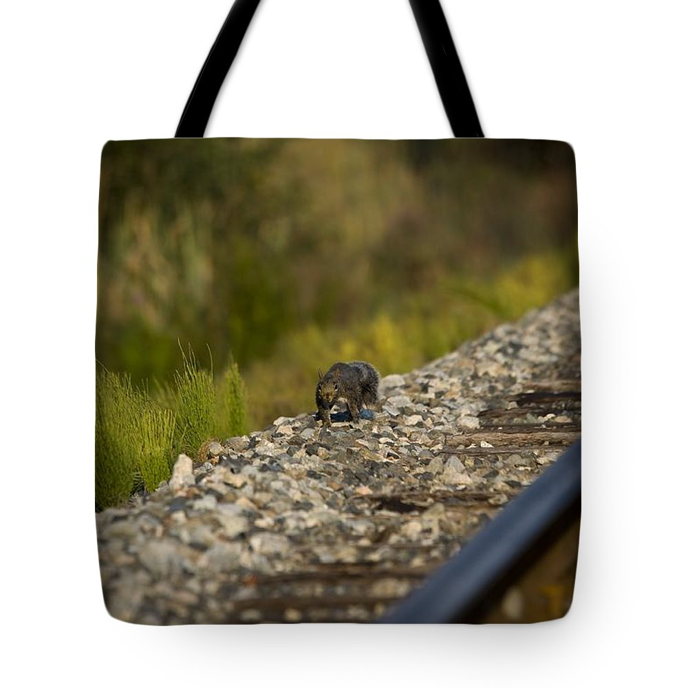 Squirrel Tote Bag featuring the photograph Come At Me Bro by Martin Cooper