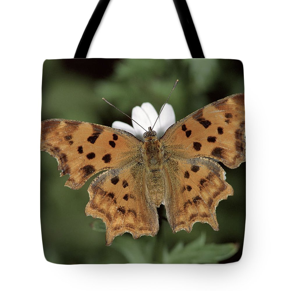 Npl Tote Bag featuring the photograph Comma Polygonia C-album, Germany by Hans Christoph Kappel