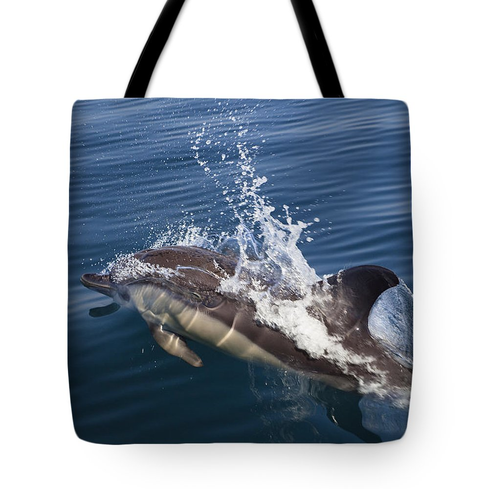Mp Tote Bag featuring the photograph Common Dolphin Delphinus Delphis by Konrad Wothe