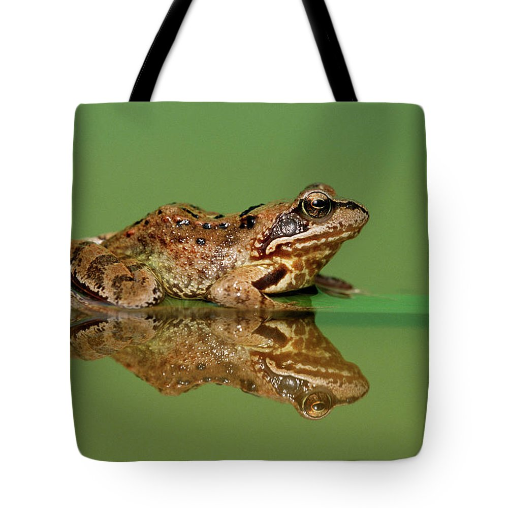 Fn Tote Bag featuring the photograph Common Frog Rana Temporaria by Ingo Arndt