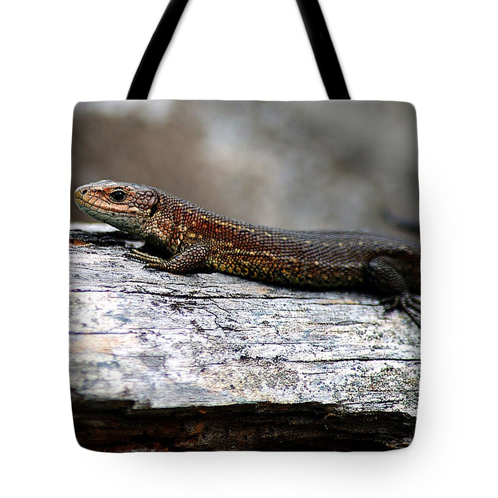 Viviparous Lizard Tote Bag featuring the photograph Common Lizard by Gavin Macrae