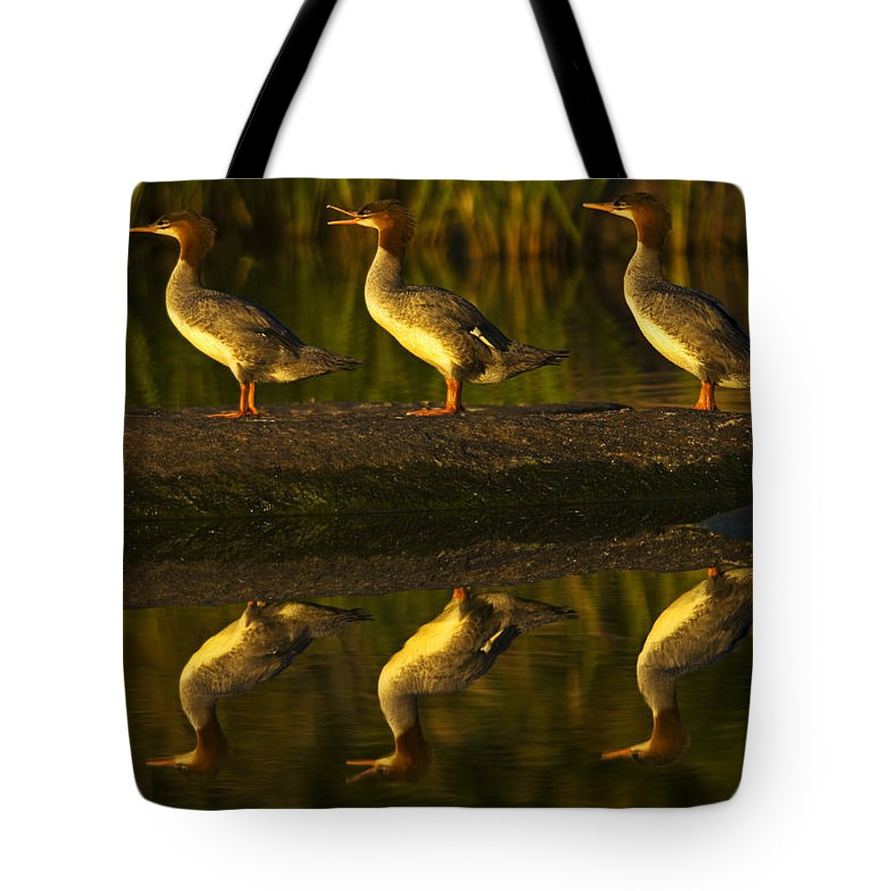 Color Image Tote Bag featuring the photograph Common Mergansers On Rock Reflecting by Mike Grandmailson