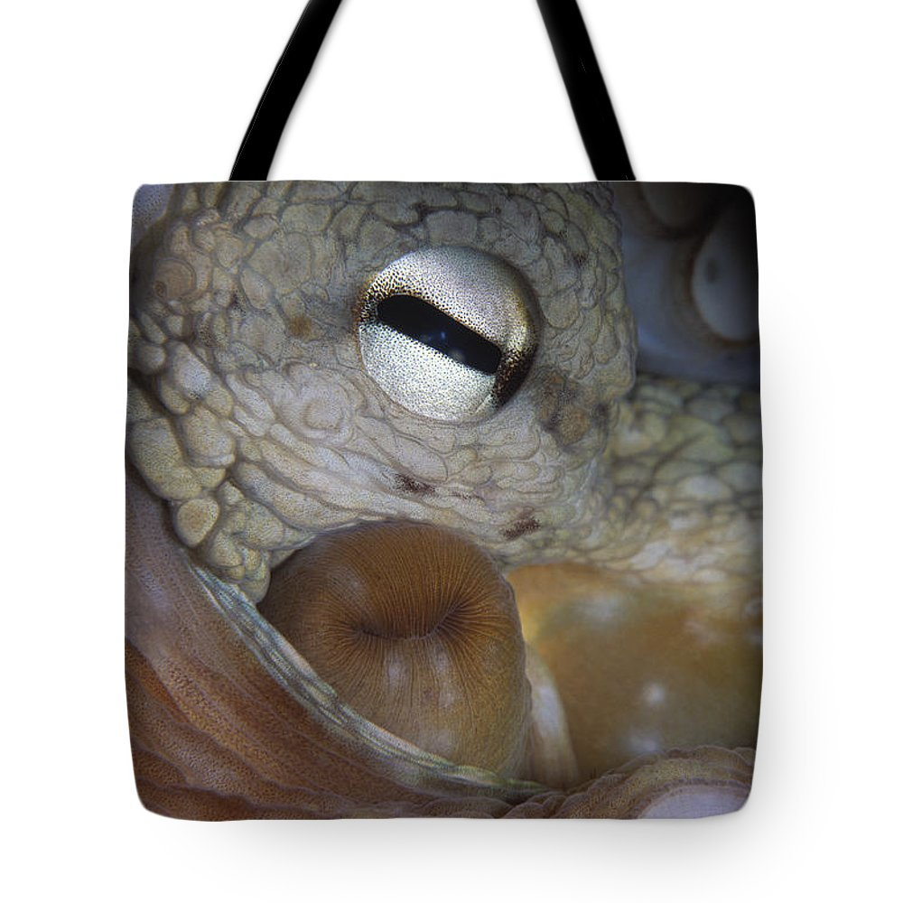 00283277 Tote Bag featuring the photograph Common Octopus Octopus Vulgaris Close by Hans Leijnse