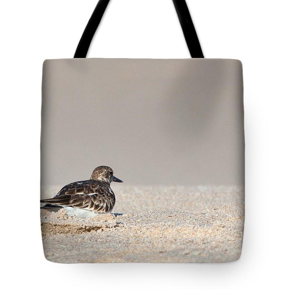 Sandpiper Tote Bag featuring the photograph Contemplative Sandpiper by Michelle Constantine